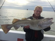 20lb Cod on Whiting Gear !